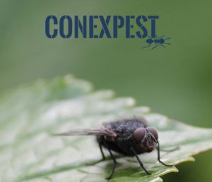 Octavius Hunt to Exhibit at ConExPest